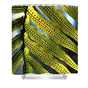 Fern Spores Shower Curtain