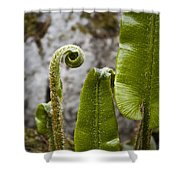 Fern Study At Blarney Castle Ireland Shower Curtain