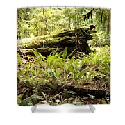 Fern Valley Shower Curtain