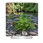 Ferns Along Banks Of Eagle Creek Shower Curtain