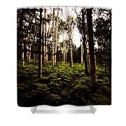 Ferns And Aspen Shower Curtain