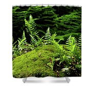Ferns And Moss On The Ma At Shower Curtain