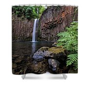 Ferns And Rocks By Abiqua Falls Shower Curtain