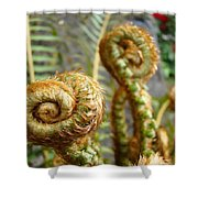 Ferns Art Print Forest Fern Artwork Canvas Baslee Troutman Shower Curtain