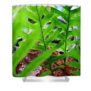 Ferns Art Prints Forest Ferns Giclee Art Prints Basle Troutman Shower Curtain