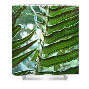 Ferns Art Prints Green Forest Fern Sunlit Giclee Baslee Troutman Shower Curtain