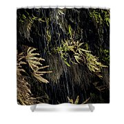Ferns Below Falls By Jean Noren Shower Curtain