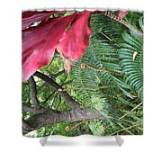 Ferns Come Alive Shower Curtain