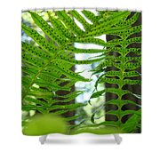 Ferns Green Redwood Forest Fern Giclee Art Prints Baslee Troutman Shower Curtain