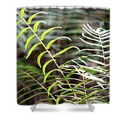 Ferns In Natural Light Shower Curtain