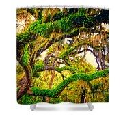 Ferns On Florida Oaks Shower Curtain