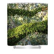 Ferns On Live Oak Shower Curtain