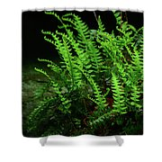 Ferns On The West Virginia At Shower Curtain