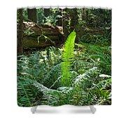 Ferns Sunlit Redwood Forest Fern Giclee Art Prints Baslee Troutman Shower Curtain