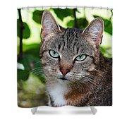 Ferocious Cat Shower Curtain