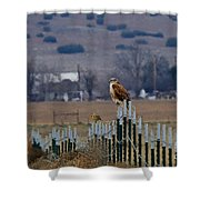 Ferruginous Hawk And Meadowlark Shower Curtain