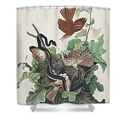 Ferruginous Thrush Shower Curtain