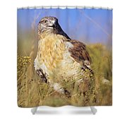 Feruginous Hawk Shower Curtain