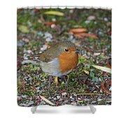 Festive Robin Shower Curtain