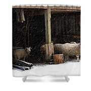 Fiber And Feather Shower Curtain
