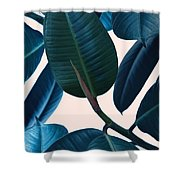 Ficus Elastica 2 Shower Curtain