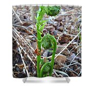 Fiddlehead Ferns In Spring Shower Curtain