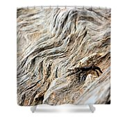 Fiddler Crab On Driftwood Shower Curtain