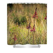 Field Flowers Shower Curtain