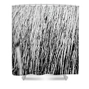Field Grasses Shower Curtain