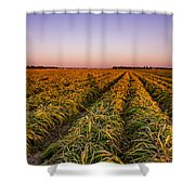 Field Lines Shower Curtain