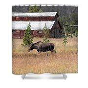 Field Moose Shower Curtain