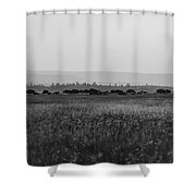 Field Of American Bison Bw Shower Curtain