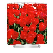 Field Of Brilliant Red Tulip Flowers In A Garden Shower Curtain