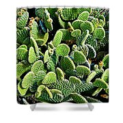 Field Of Cactus Paddles Shower Curtain