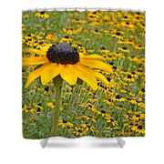 Field Of Coneflowers Shower Curtain