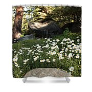Field Of Daisies In Tahoe Shower Curtain