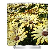 Field Of Daisies Landscape Floral Art Prints Daisy Baslee Troutman Shower Curtain