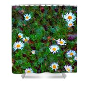 Field Of Daisys  Shower Curtain