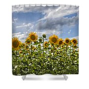 Field Of Dreams Panorama Shower Curtain