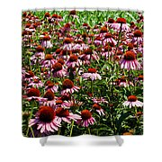 Field Of Echinacea Shower Curtain