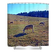 Field Of Ewes Shower Curtain