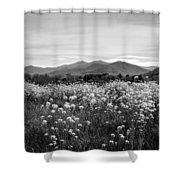 Field Of Flowers In Black And White Shower Curtain