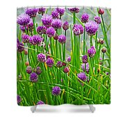 Field Of Onions  Shower Curtain