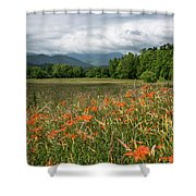 Field Of Orange Daylilies Shower Curtain