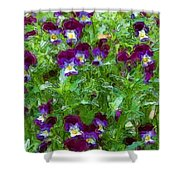 Field Of Pansy's Shower Curtain