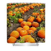 Field Of Pumpkins Card Shower Curtain