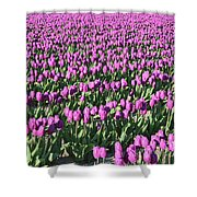 Field Of Purple Flowers Shower Curtain
