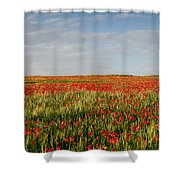 Field Of Red Poppy Anemones Late In Spring  Shower Curtain