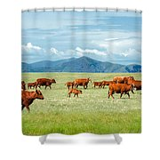 Field Of Reds Shower Curtain