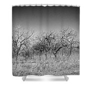 Field Of Trees Shower Curtain